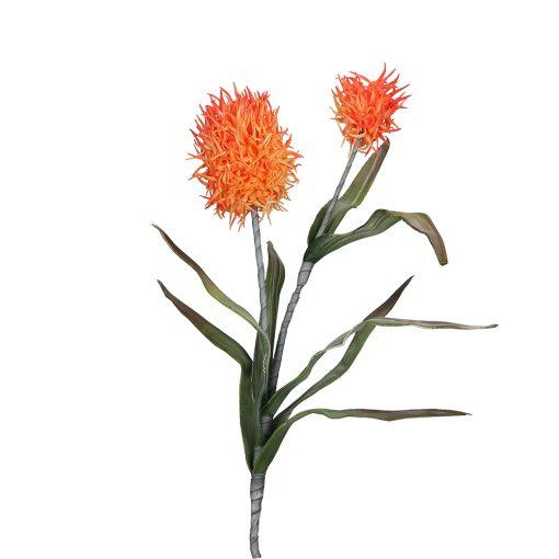 Flora Arancio Alium