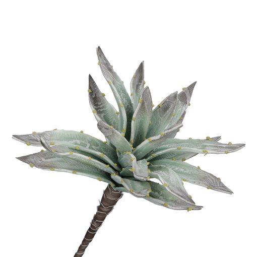 Flora Argentea Aloe