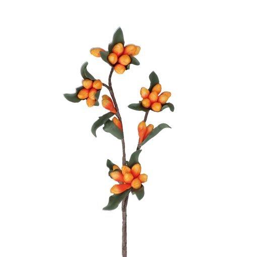 Flora Arancio Genziana