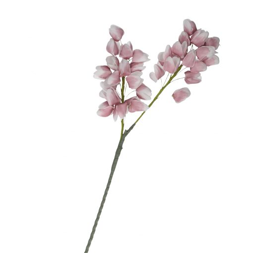Flora Rosa Chichingi