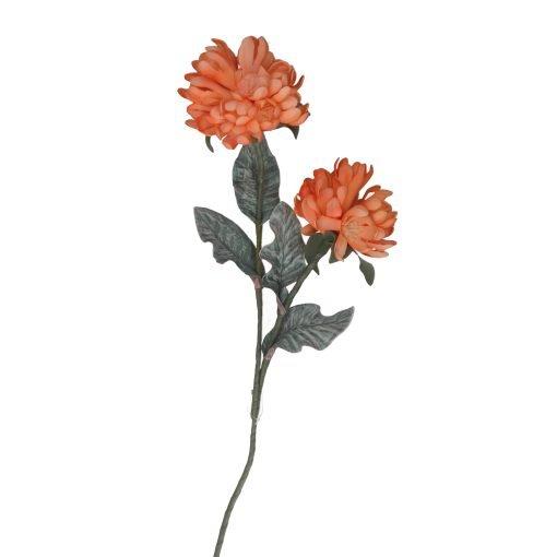 Flora Arancio Cliva