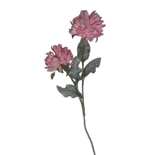 Flora Rosa Cliva