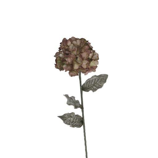 Flora Tortora Ortensia