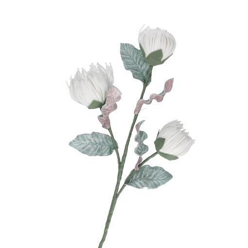 Flora Bianco Crisos