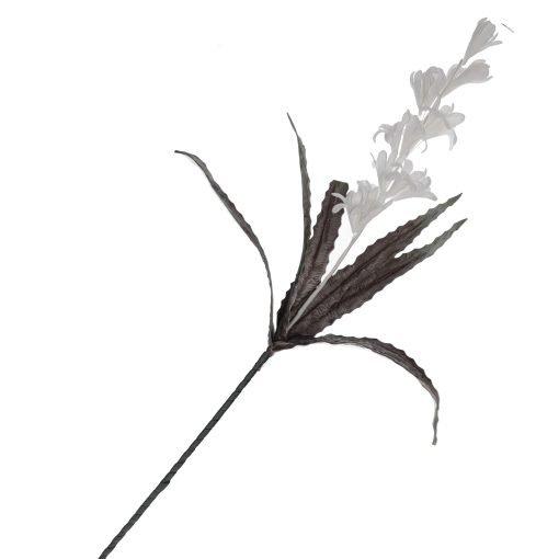 Flora Bianco Calatea