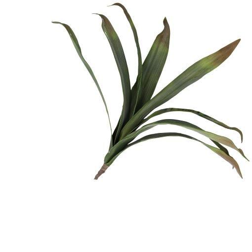 Flora Verde Agave Media