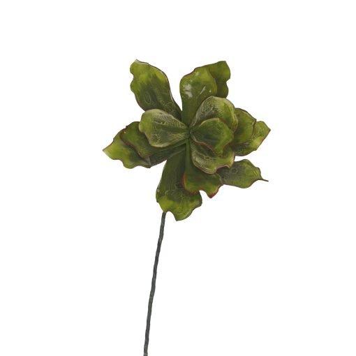 Flora Pianta Riccia Piccola