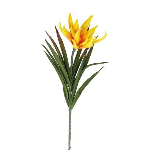 Flora Giallo Succulenta Fiorita