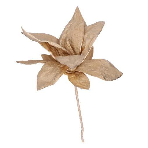 Flora Oro Choisya