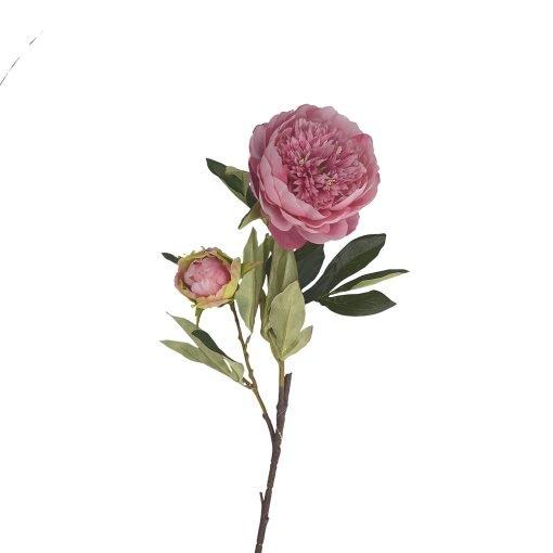 Fiorile Peonia Rosa