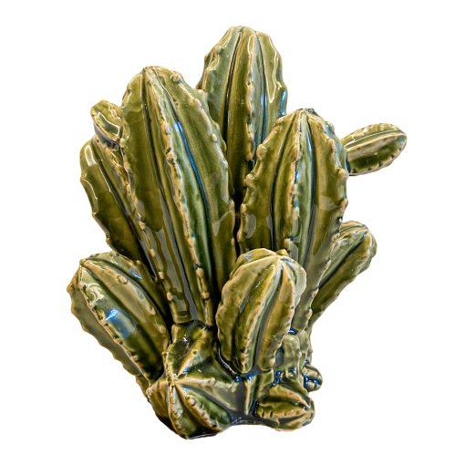 Cactus Winter in Italy M